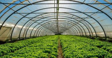 В Красногвардейском районе Крыма построят консервный завод и тепличный комплекс
