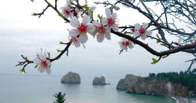 В Крыму первые дни весны начнутся с резкого потепления