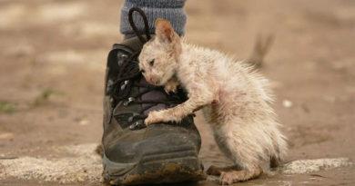Здравницы и предприятия Евпатории создадут реестр бездомных животных