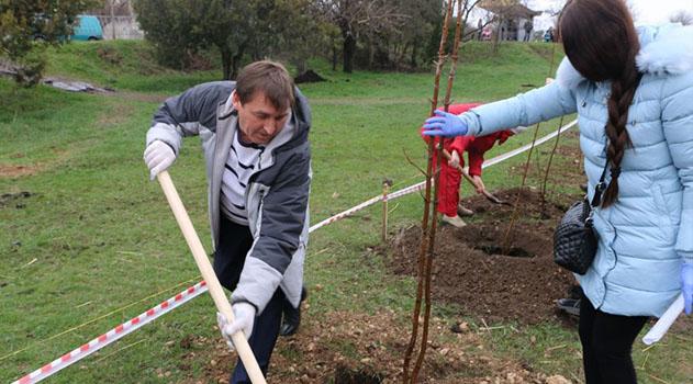 Под Симферополем высадили аллею из 300 деревьев