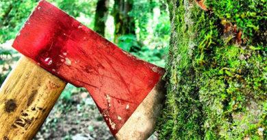 Прокуратура инициировала возбуждение уголовного дела о незаконной вырубке деревьев в Белогорском лесхозе