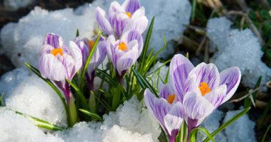 Сегодня в Крыму до 21 градуса тепла