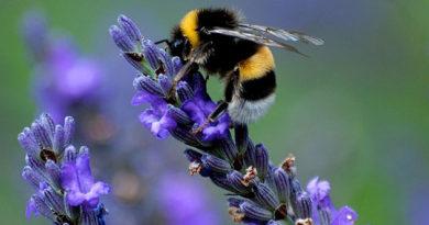 Сегодня в Никитском саду открылась международная конференция по пчеловодству