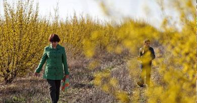 Симферополь и Керчь установили температурный рекорд марта