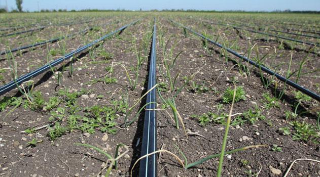 В 2018 году в Крыму смогут дополнительно использовать 6 тыс га орошаемых сельхозземель