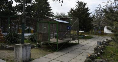 В симферопольском зоопарке пумы канадские волки и рысь