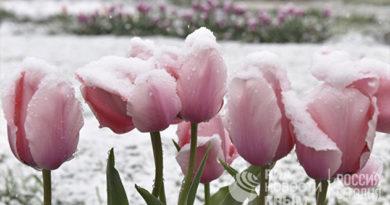 Непогода не должна значительно повлиять на растения ботсада КФУ - директор