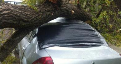 В Симферополе упавшее дерево разбило две машины