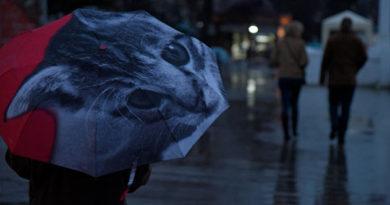 В пятницу в Крыму до +12 и сильные дожди
