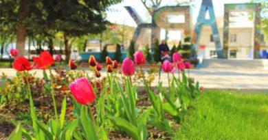 В Детском парке Симферополя массово зацвели тюльпаны
