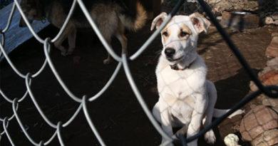 Глава Россельхознадзора раскритиковал ситуацию с бродячими собаками в Крыму