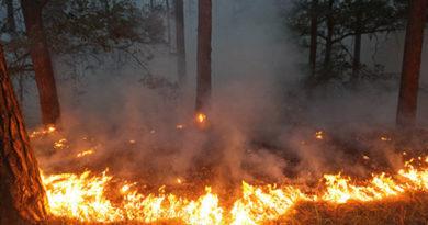 На выходные в Крыму объявлено штормовое предупреждение о высокой пожароопасности