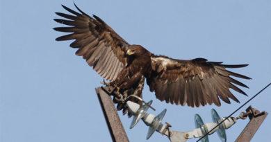 Птицы стали причиной почти трети аварийных отключений ЛЭП в Крыму