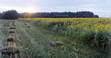 Сельское хозяйство лидирует в Крыму по объему инвестиций