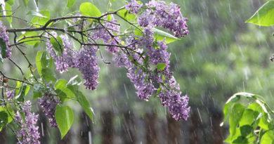 Во вторник в Крыму до 21 градуса тепла, дожди