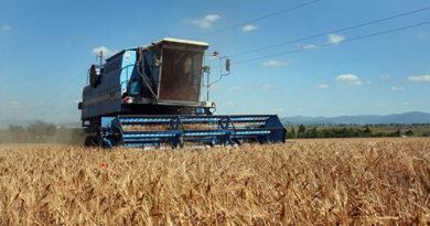 Крымская жатва: аграрии приступили к уборке ранних зерновых