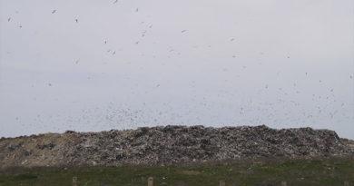 Рекультивация городской свалки в Каменке начнется в конце этого года