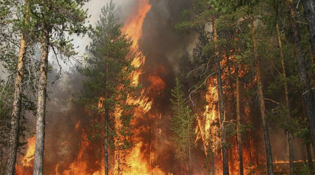 Карадагский заповедник спасли от пожара