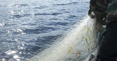 Крымские браконьеры мешали рыбе размножаться