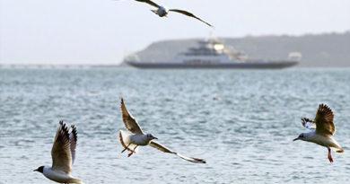 На выходных паромы перевезли через Керченский пролив более 86 тыс человек
