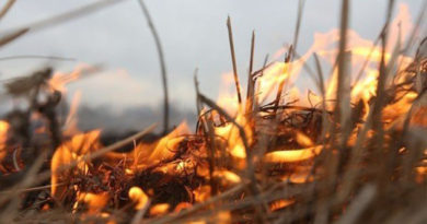 Шторм жаре не помеха: в Крыму предупредили о высокой пожарной опасности 4-6 июля