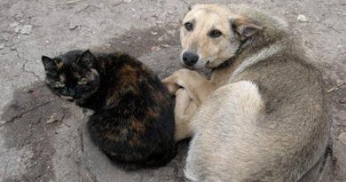 v-krymu-zaregistrirovano-bolee-15-tysyach-bezdomnyh-zhivotnyh