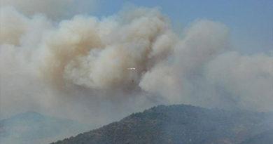 Пожар в Судакском регионе уничтожил несколько массивов краснокнижной сосны
