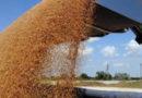 Крымские сельхозпроизводители нарастили в сентябре объем экспорта зерновых