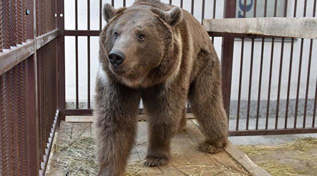 krymskie-medvedi-v-spyachku-ne-vpadayut