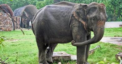 svyshe-70-slonov-pogibli-za-god-v-indijskom-shtate-assam-iz-za-deyatelnosti-cheloveka