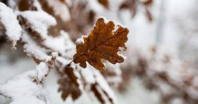 v-krymu-v-ponedelnik-silnye-livni-so-snegom-i-veter