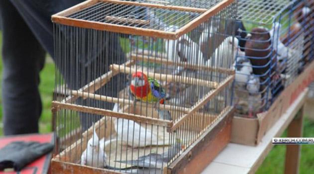 v-kerchi-pokazali-golubej-redkih-porod
