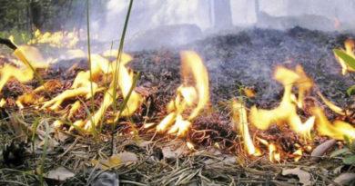 v-krymu-zapretili-lesnye-pikniki-s-shashlykami-na-majskie-prazdniki
