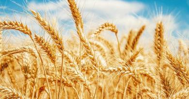 Производители спрогнозировали десятипроцентное повышение цен на хлеб к октябрю