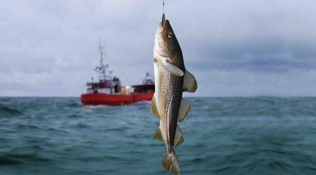 krymskie-rybaki-vylovili-na-80-tonn-barabuli-bolshe-chem-v-proshlom-godu