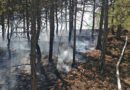 Непогашенный костер привел к пожару в крымском лесу