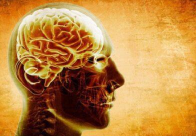 Названы пять главных продуктов для улучшения работы мозга