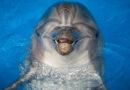 Мораторий на вывоз дельфинов из РФ